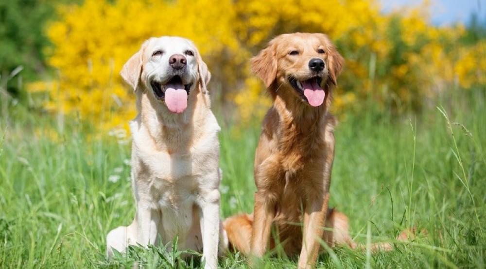 Πόση είναι τελικά η ηλικία του σκύλου σε ανθρώπινα χρόνια;