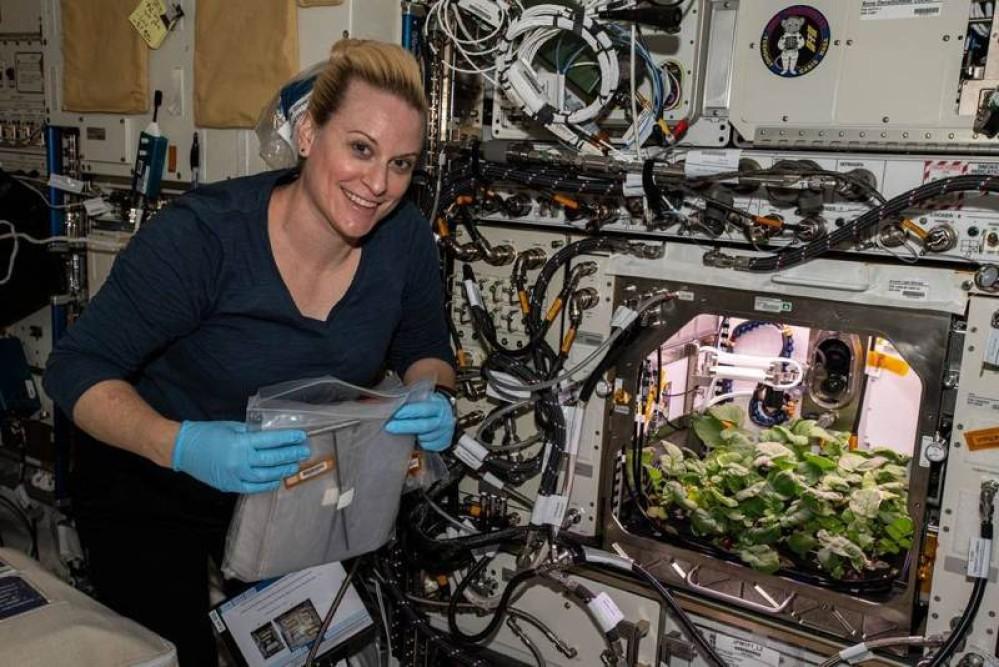 NASA: Η πρώτη επιτυχημένη καλλιέργεια από ραπανάκια στο Διάστημα είναι γεγονός