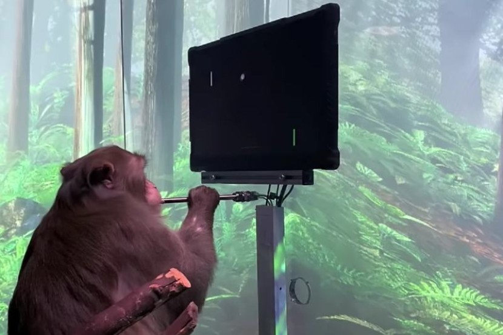 Neuralink: Ώρα να δείτε μια μαϊμού να παίζει Pong με το μυαλό της