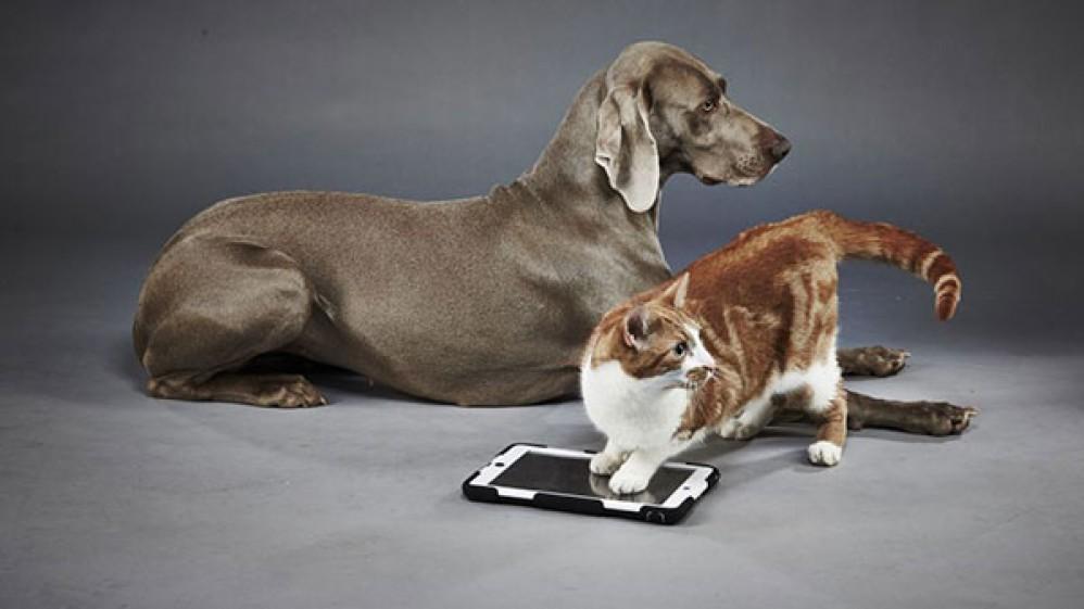 Τώρα μπορείς να αναγνωρίζεις τη ράτσα του σκύλου ή της γάτας με το Google Lens